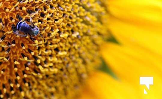 July 12 cobourg ecology garden459