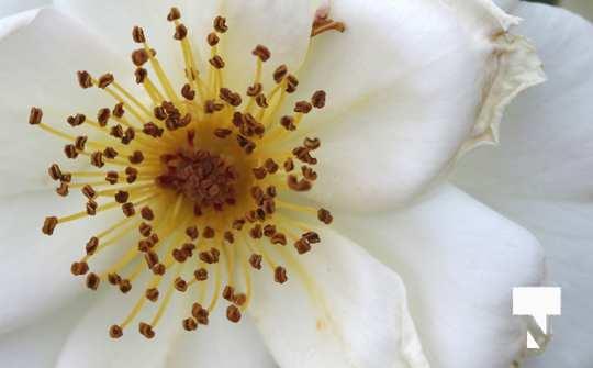 July 12 cobourg ecology garden461