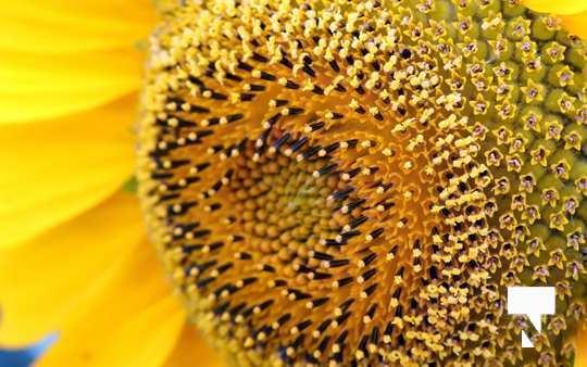 July 12 cobourg ecology garden463