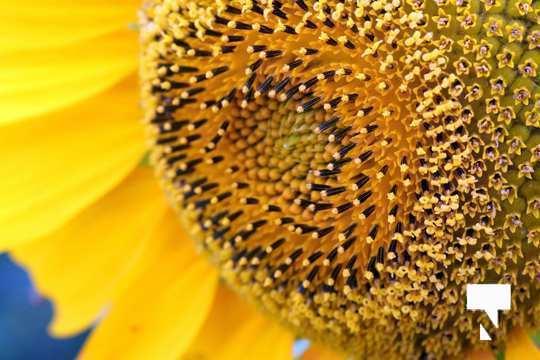 July 12 cobourg ecology garden464