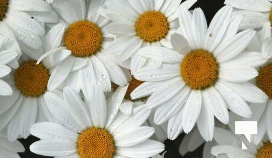 July 12 cobourg ecology garden466