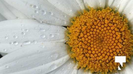 July 12 cobourg ecology garden467