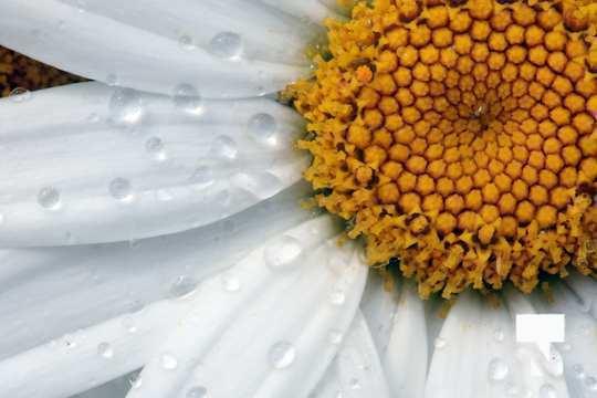 July 12 cobourg ecology garden470