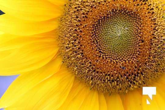 July 12 cobourg ecology garden472