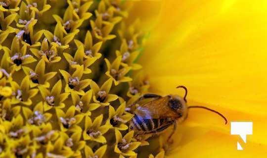 July 12 cobourg ecology garden474