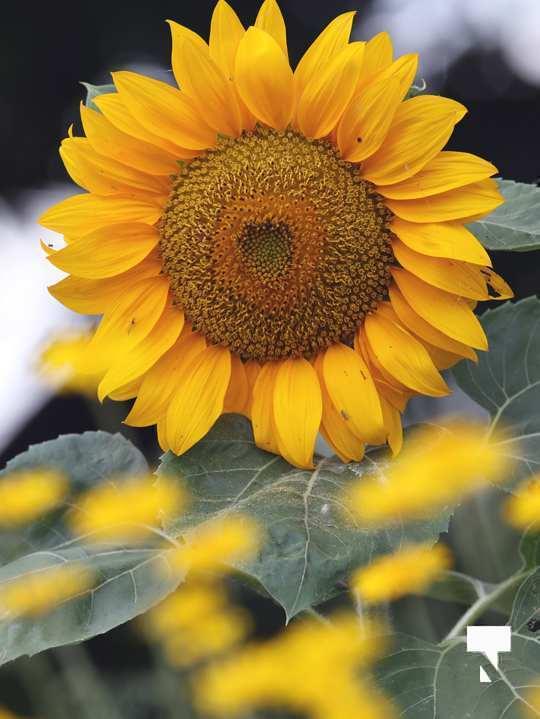 July 12 cobourg ecology garden479