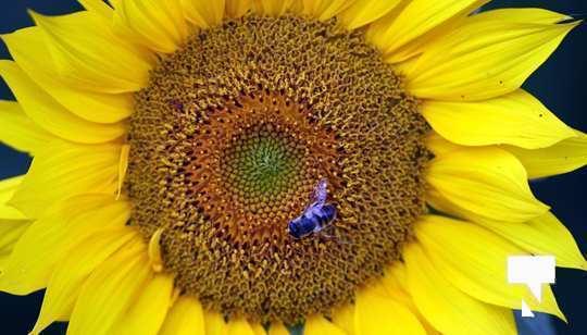 July 12 cobourg ecology garden480