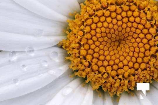 July 12 cobourg ecology garden481