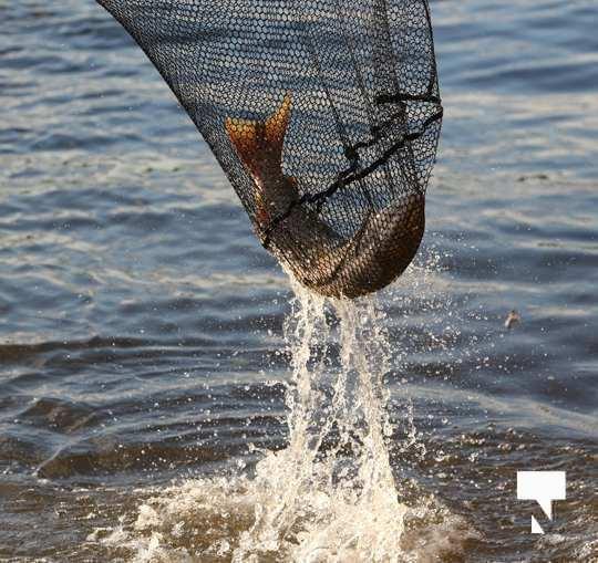 Ganaraska River Fish443
