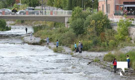 Ganaraska River Fish445