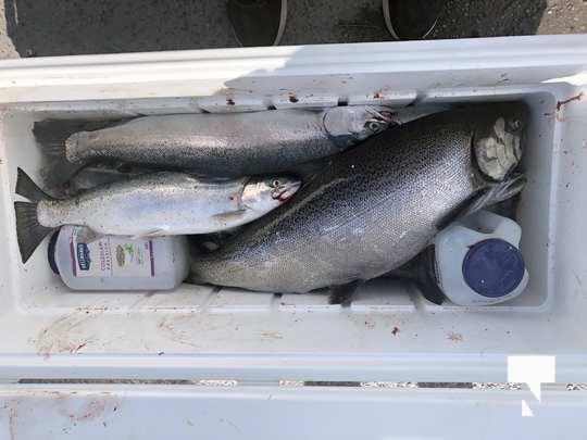 aug 1 fish123