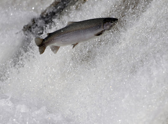 Rainbow Trout Port Hope March 30, 2021865