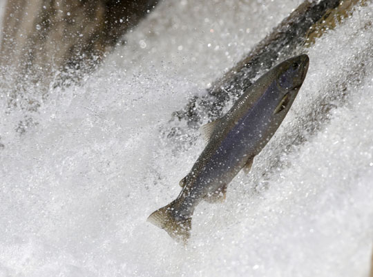 Rainbow Trout Port Hope March 30, 2021867
