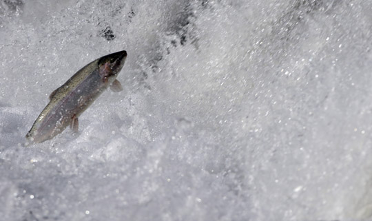 Rainbow Trout Port Hope March 30, 2021869