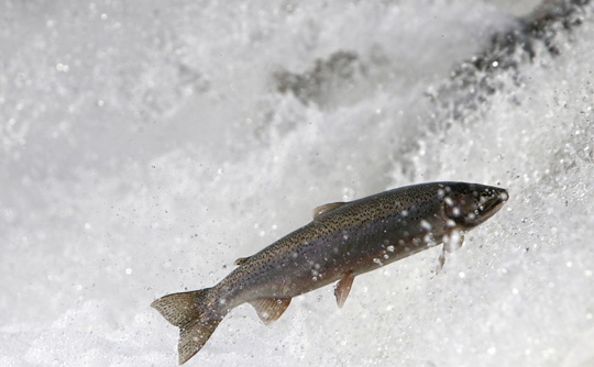 Rainbow Trout Port Hope March 30, 2021873