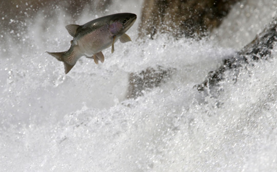 Rainbow Trout Port Hope March 30, 2021874