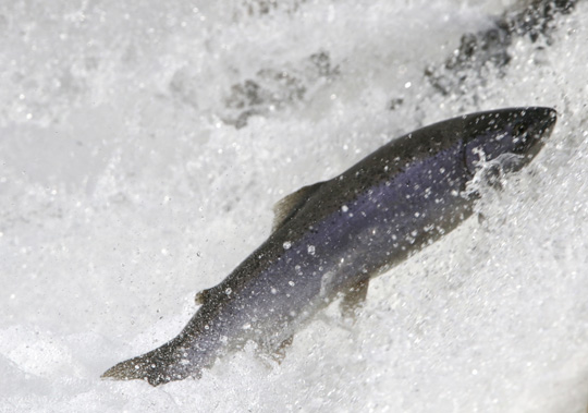 Rainbow Trout Port Hope March 30, 2021877