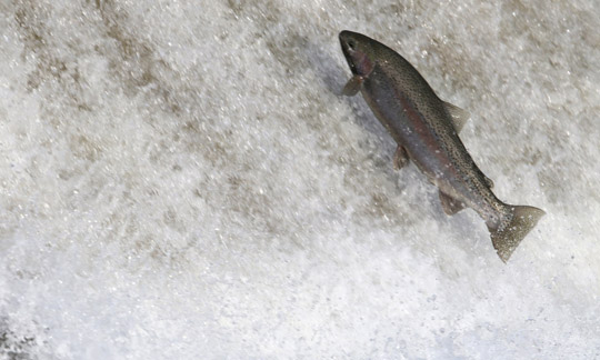 Rainbow Trout Port Hope March 30, 2021885
