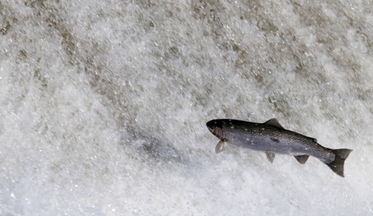 Rainbow Trout Port Hope March 30, 2021886