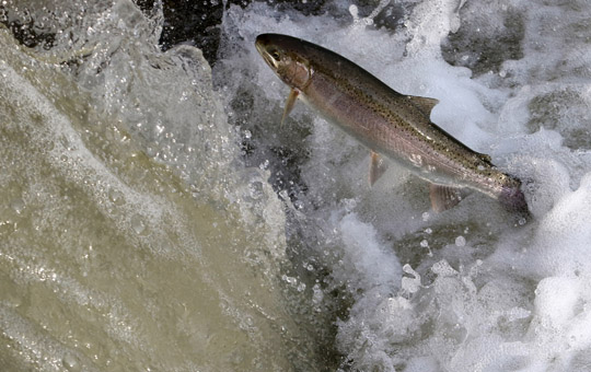 Rainbow Trout Port Hope March 30, 2021894