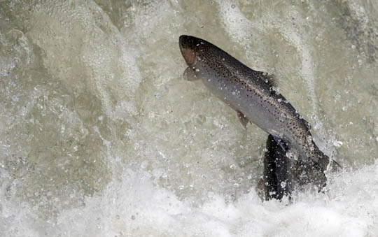 Rainbow Trout Port Hope March 30, 2021899
