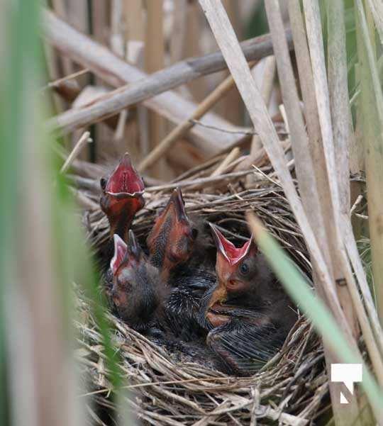 Birds May 22, 20212318