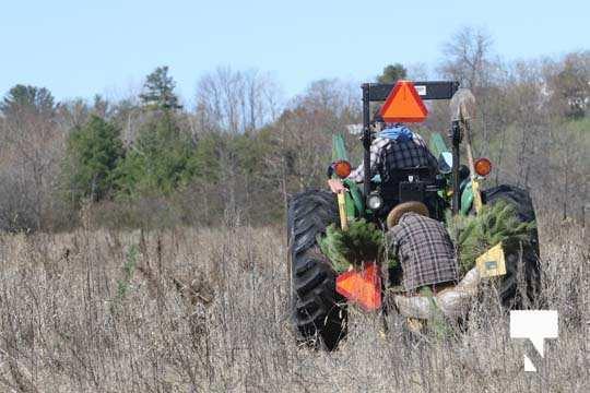 Planting Trees Cramahe Township May 1, 20211824