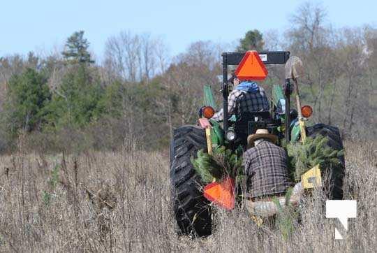Planting Trees Cramahe Township May 1, 20211825