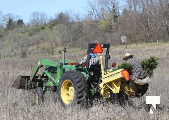 Planting Trees Cramahe Township May 1, 20211826