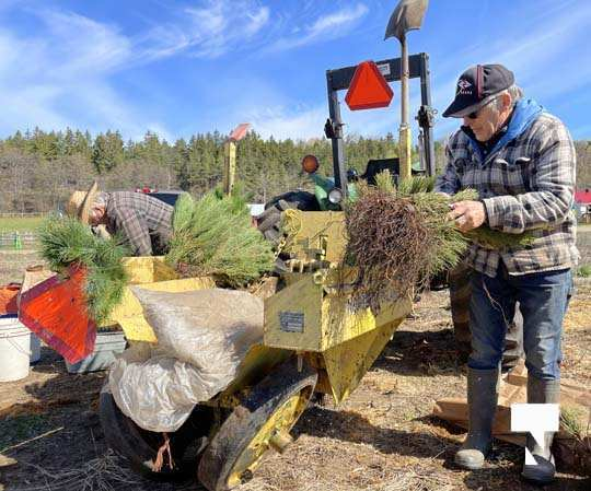 Planting Trees Cramahe Township May 1, 20211835