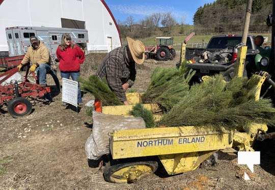 Planting Trees Cramahe Township May 1, 20211836