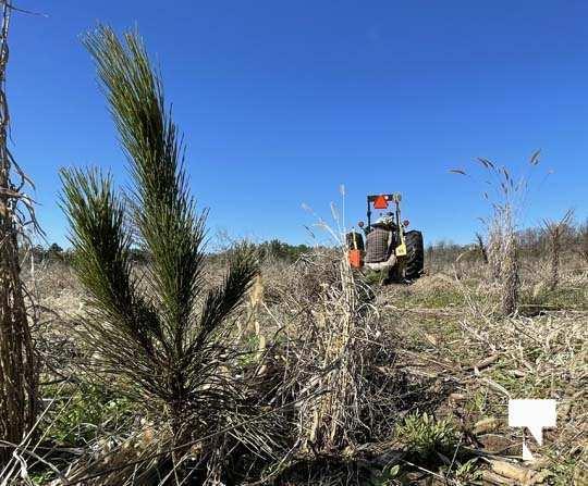 Planting Trees Cramahe Township May 1, 20211839
