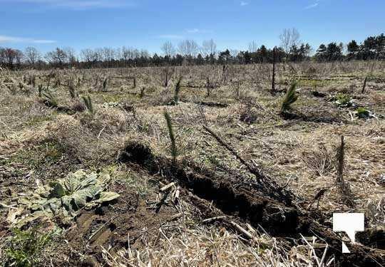 Planting Trees Cramahe Township May 1, 20211840