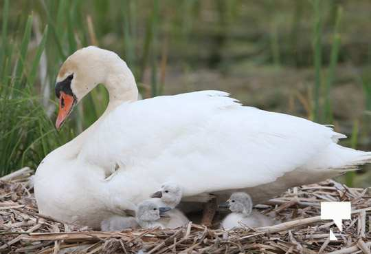 swans baby May 21, 20212270