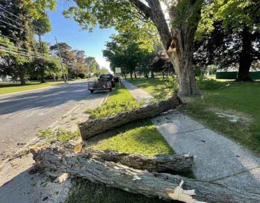 tree limb cobourg June 10, 20212971