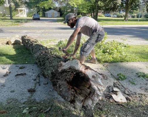 tree limb cobourg June 10, 20212972