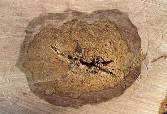 tree limb cobourg June 10, 20212980