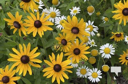 Cobourg Ecology Garden July 13, 20213955