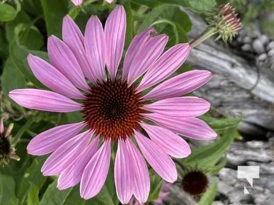 Cobourg Ecology Garden July 13, 20213958