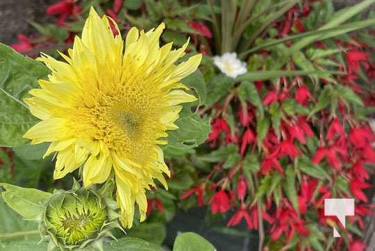 Cobourg Ecology Garden July 24, 20210089