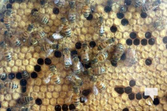 Dancing Bee Equipment July 26, 20210113