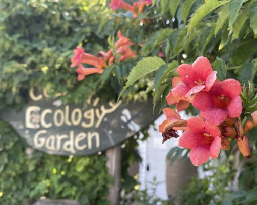 Cobourg Ecology Garden August 3, 2021, 20210369