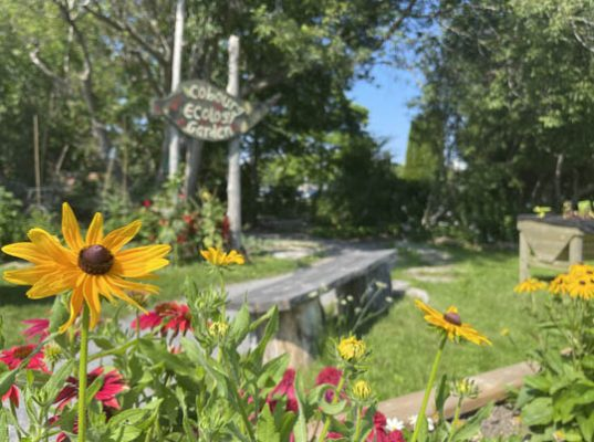 Cobourg Ecology Garden August 3, 2021, 20210371