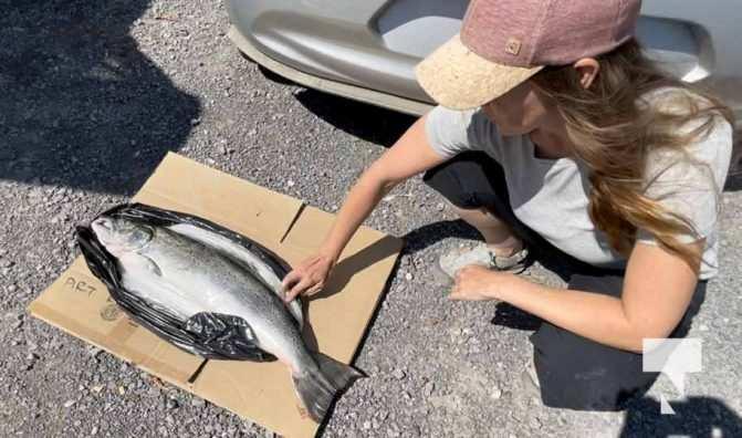 Atlantic Salmon September 13, 20210162