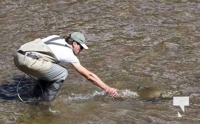 Ganaraska River Salmon September 6, 20210330