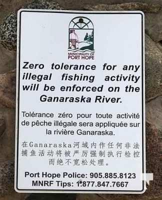 Ganaraska River Salmon September 6, 20210332