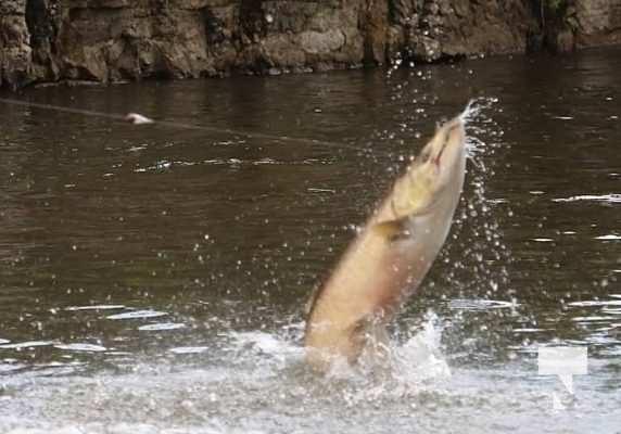 Ganaraska River Salmon September 6, 20210334