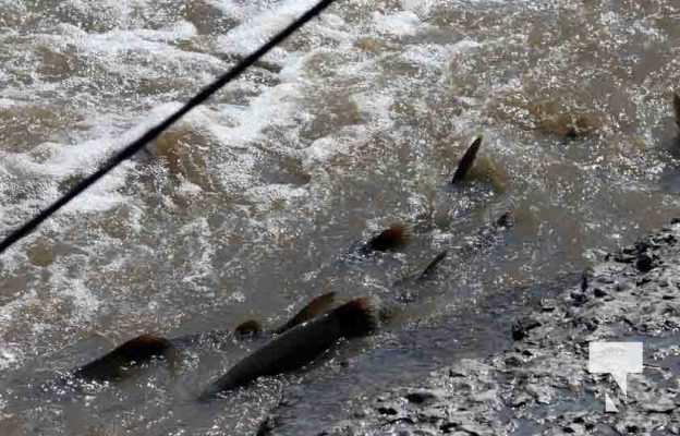 Salmon Fishing Port Hope September 8, 20210506