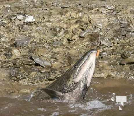 Salmon Fishing Port Hope September 8, 20210507