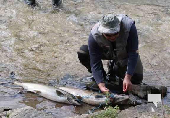 Salmon Ganaraska River Port Hope September 12, 20210093